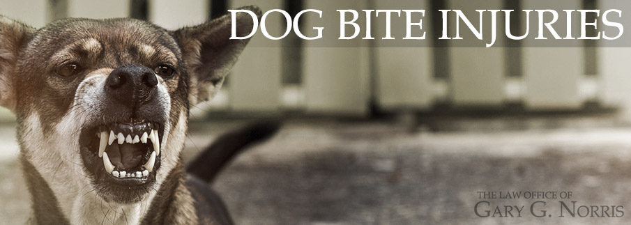 dog bites and related injuries - recommended lawyers